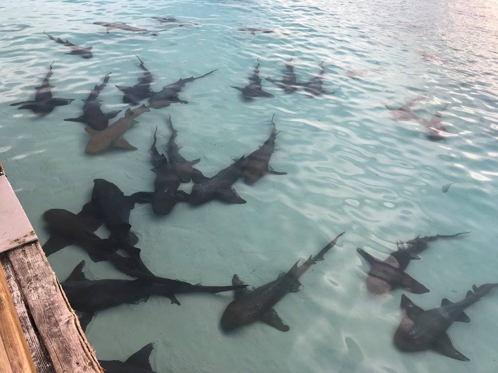 Sharks at Highbourne - not for petting