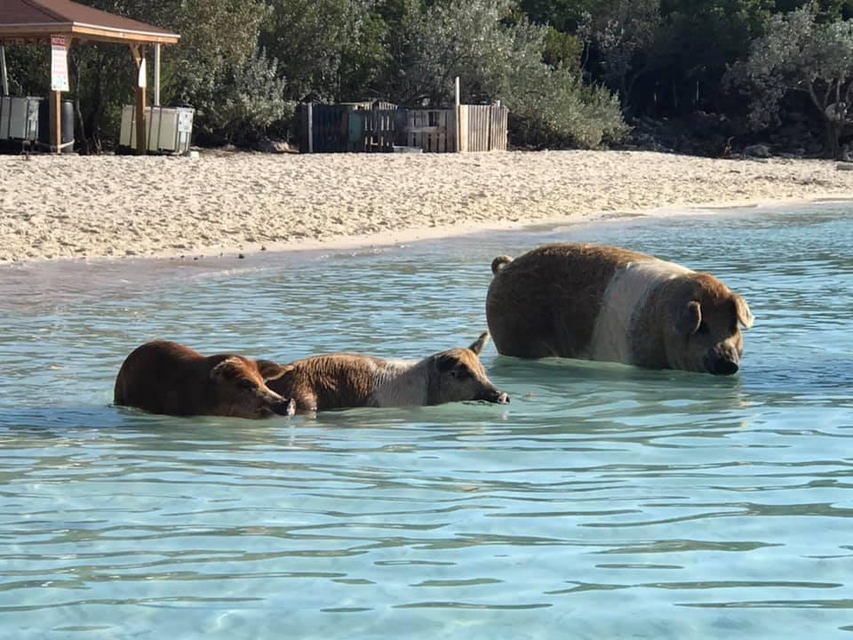 They do swim - Big Major