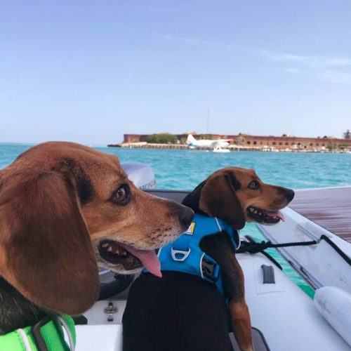 Cagney and Lacey - Dry Tortugas