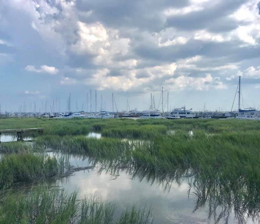 City Marina and marshlands