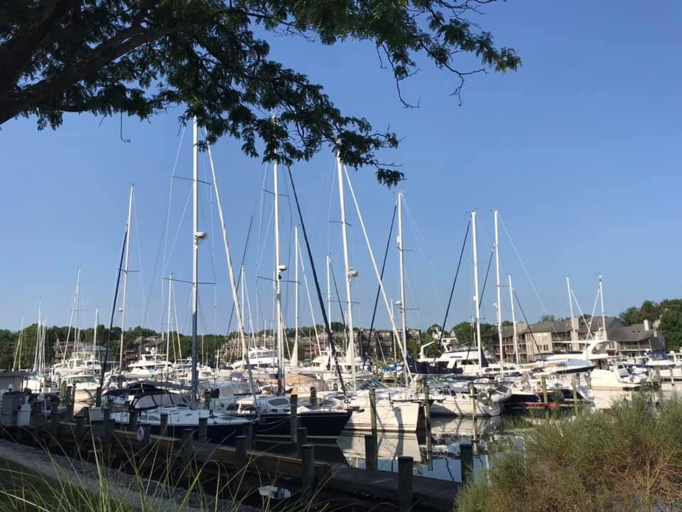 View from the marina