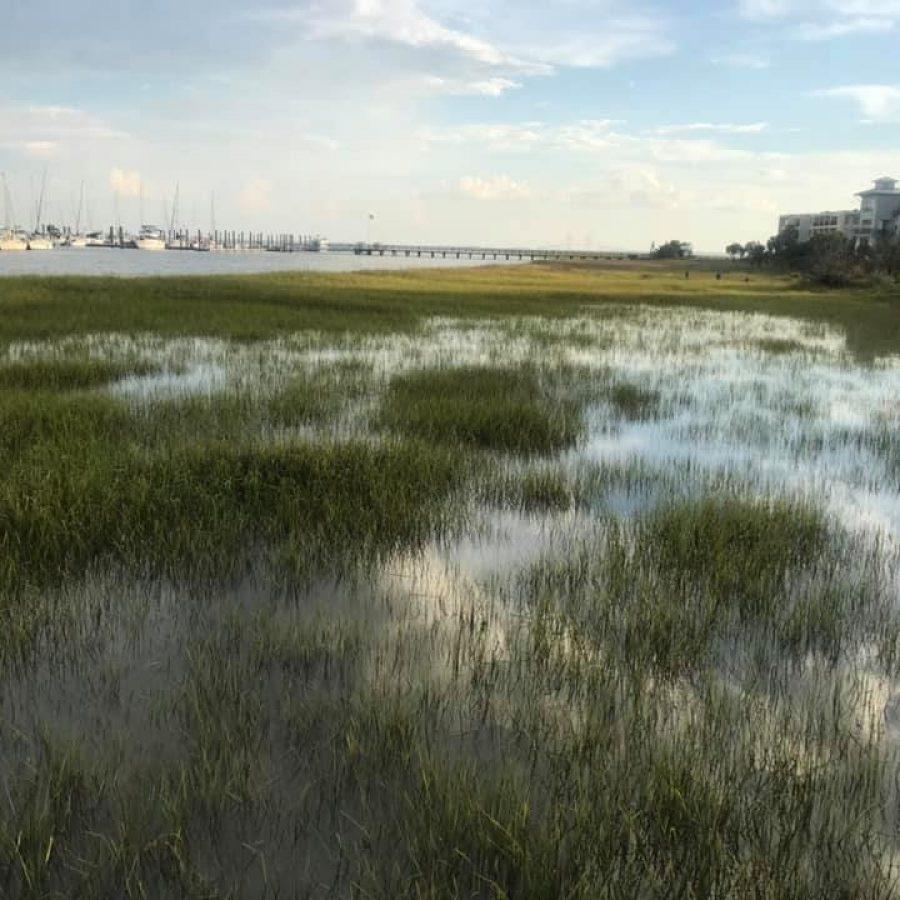 SS2 - Marina and marshes -3