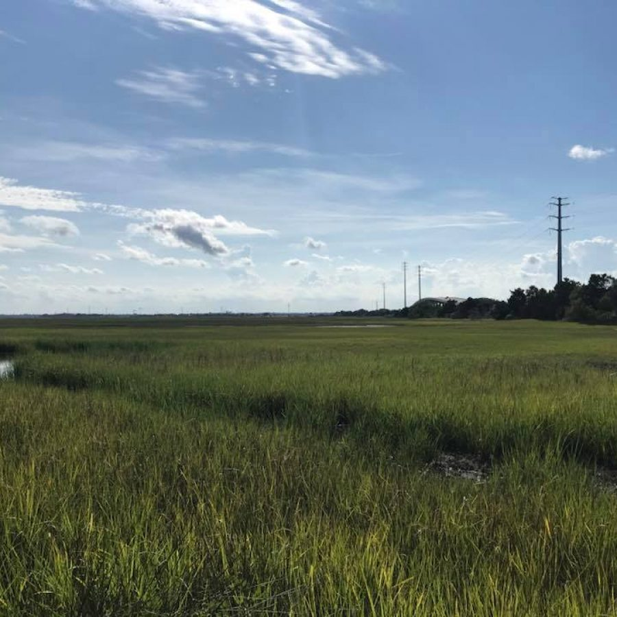 SS2 - Marshes -2