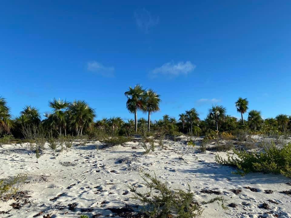 Shroud beach