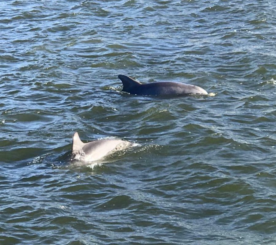 Beaufort dolphins