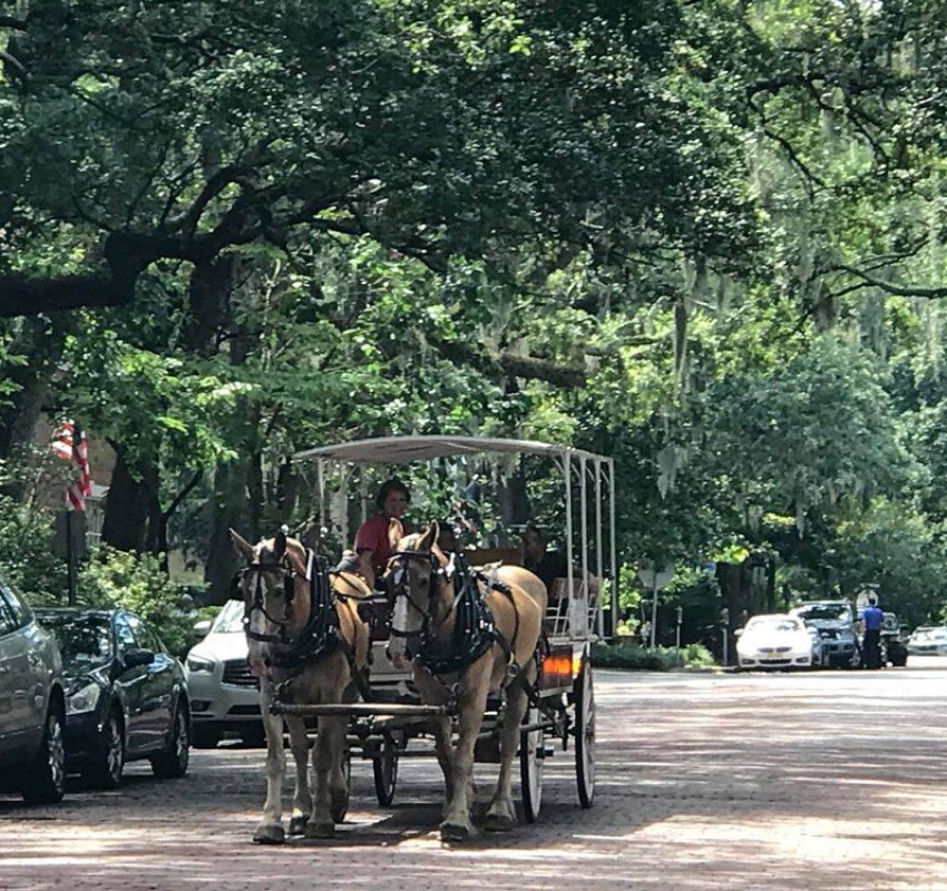 Savannah street and moss draped oaks