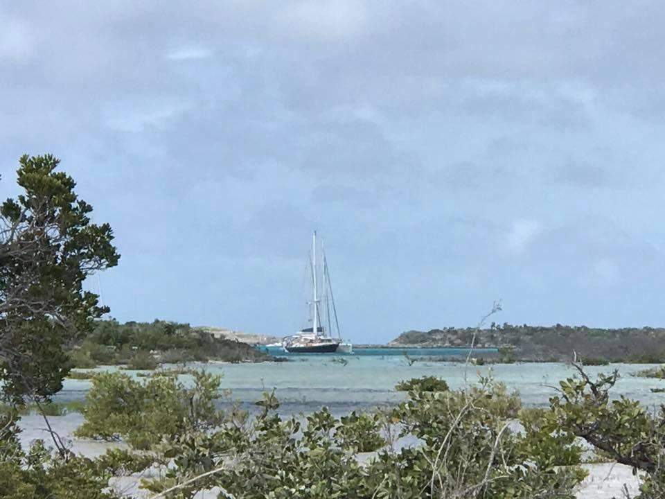Warderick mangroves
