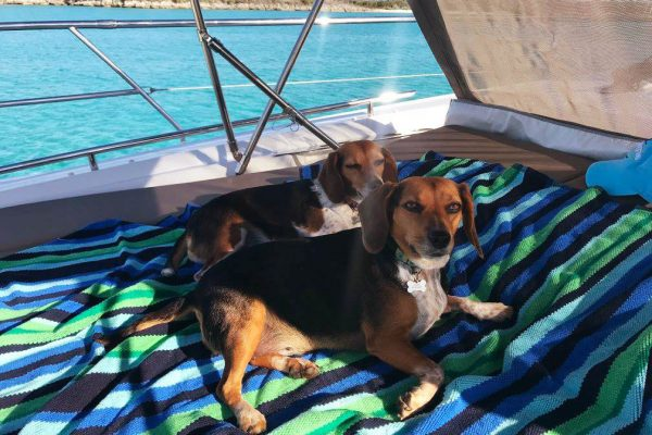 Cagney and Lacey on the bow - Bahamas