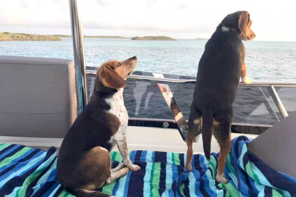 Cagney and Lacey on the flybridge - Berry Islands
