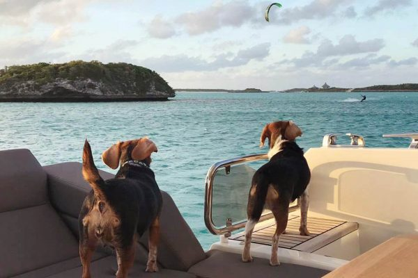 Cagney and Lacey watching kite surfer - Warderick Wells